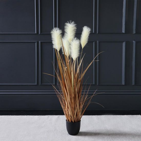 Potted Pampas Grass