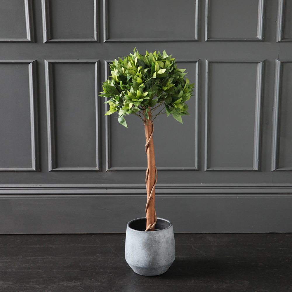 Spread a little greenery with our gorgeous Bay Tree.
