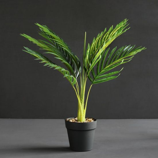 Hawaiian Palm Plant Tree Green Black Pot 60cm Decoration Flower