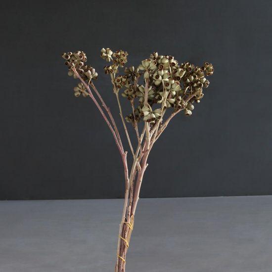 Seed Herbs