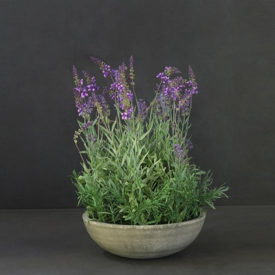 Potted Lavender Planter Green Concrete PE Plastic 50cm Indoor Lounge Kitchen Bohemian