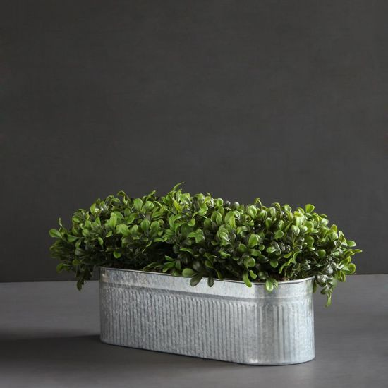 Boxwood Container