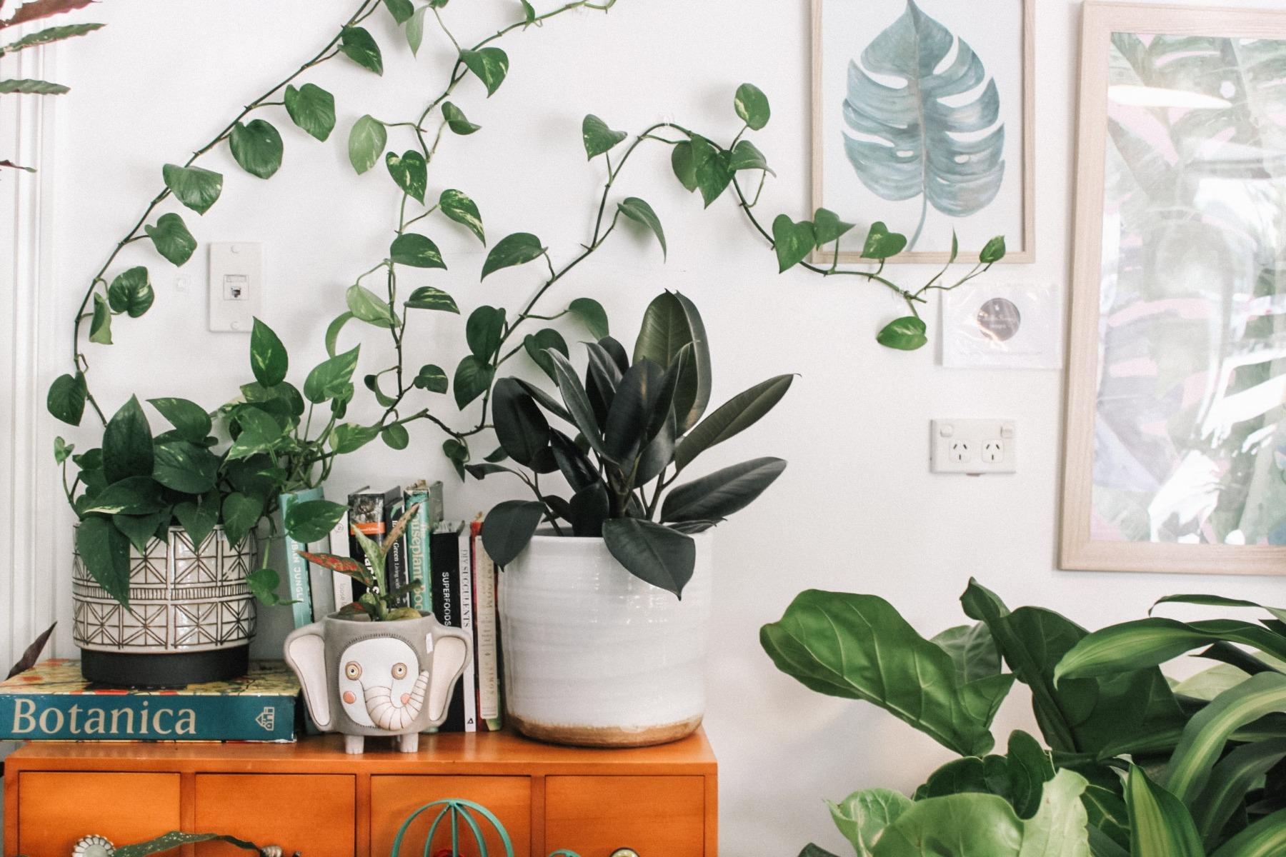 Plant Life Room