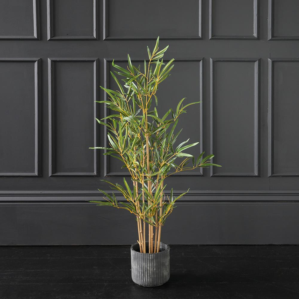 Tropical Bamboo inside your very own home!