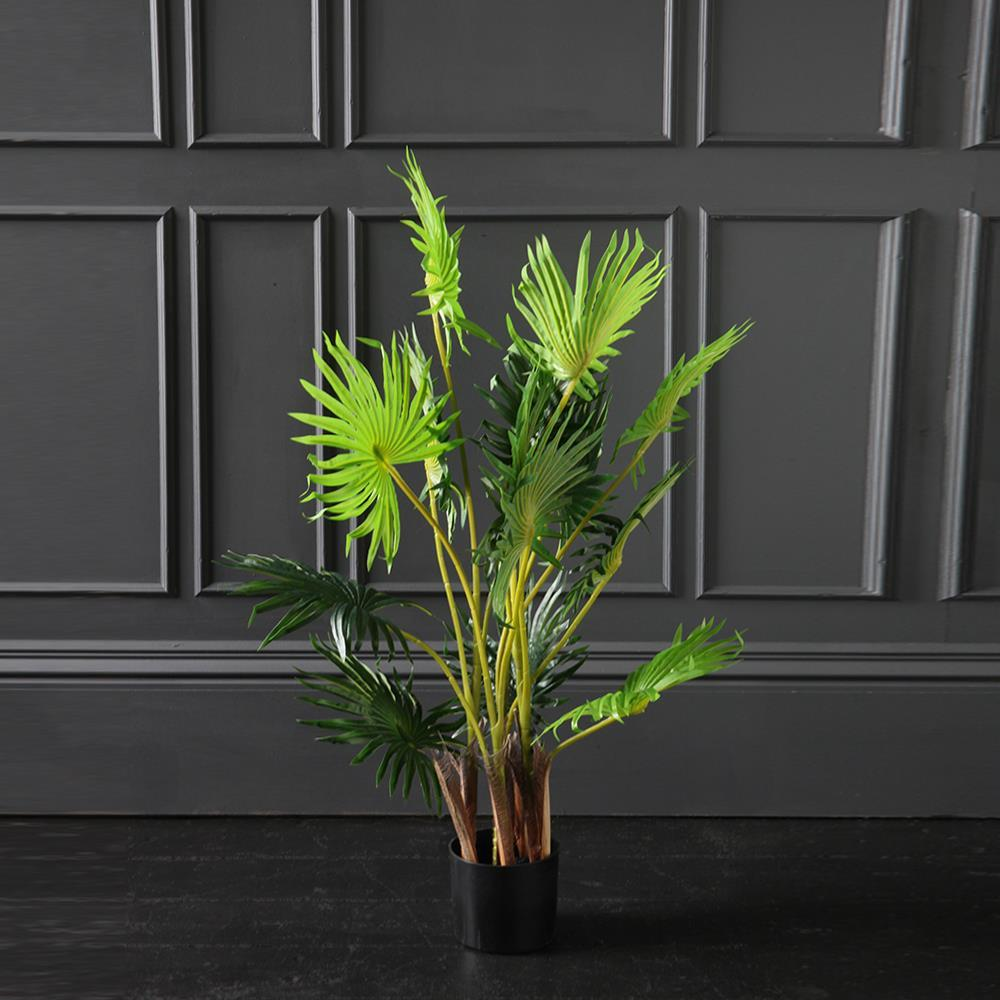 We're a huge fan of our Fan Palm Tree here at WSG!